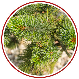 we normally offer three type of christmas tree - Type Of Christmas Trees